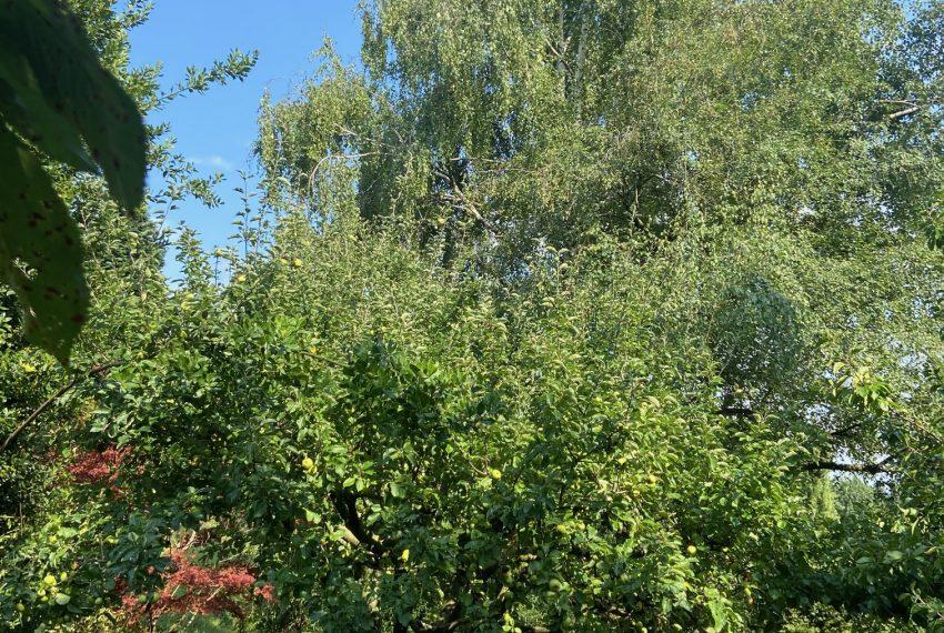 ampio giardino pianeggiante